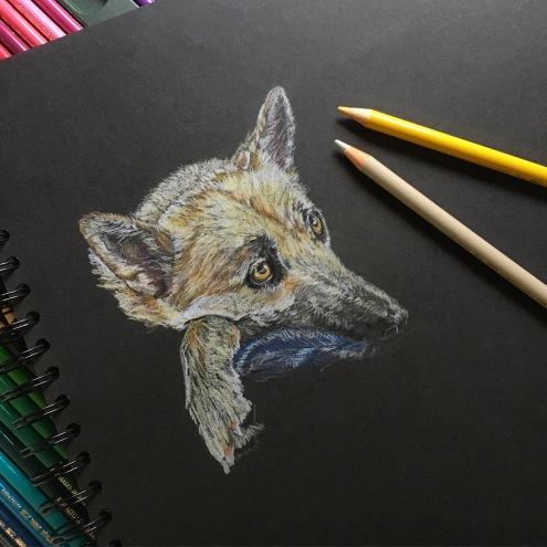 Quick coloured pencil sketch of Syl